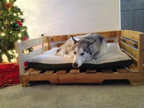 6 diy pallet beds for dogs you can make at home