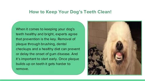 how do you keep your dog off the couch how to keep your dog s teeth clean