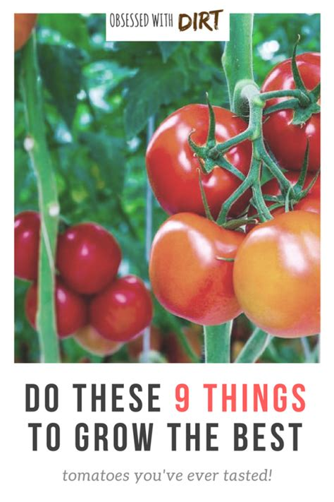 do these 9 things to grow the best tomatoes ever