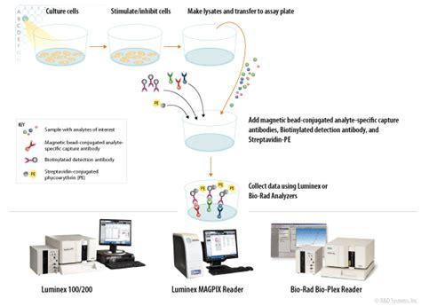 a homogeneous multiplex immunoassay for rtk