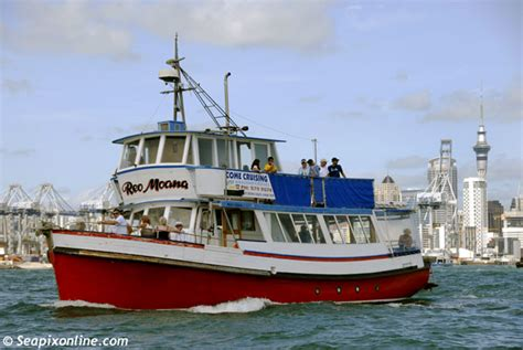 red boat fishing charters auckland reo moana seapixonline