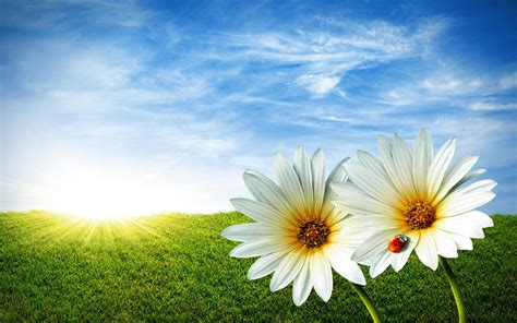 win with flower wallpapers windows 7 flowers wallpapers