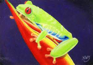 Colorful tree frogs colorful red eyed tree frog by