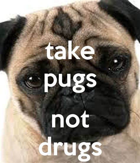 pugs no drugs pugs not drugs memes