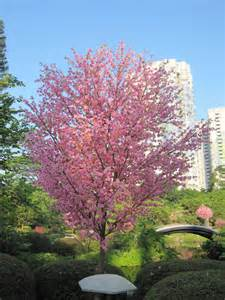 artificial cherry blossom trees garden decorative tree with many small flowers buy artificial
