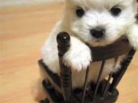 puppy slideshow puppy slideshow