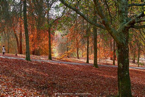 autumn colours at mt lofty botanical gardens adelaide