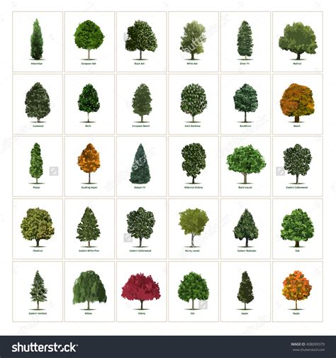 type of trees stock vector thirty different vector tree illustrations