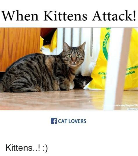 Cat Lover Meme - 25 best memes about kitten attack kitten attack memes