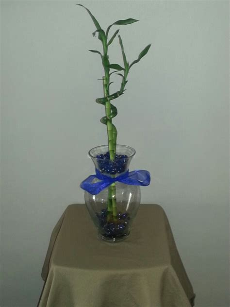 Betta Fish Vase by 10 5 Inch Betta Vase Aquarium With Lucky Bamboo Blue