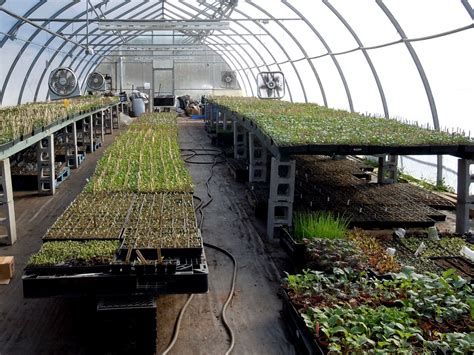 untitled new post has been published on interior brick floor potting shed green house greenhouses pinterest actually i wouldnt mind a roof