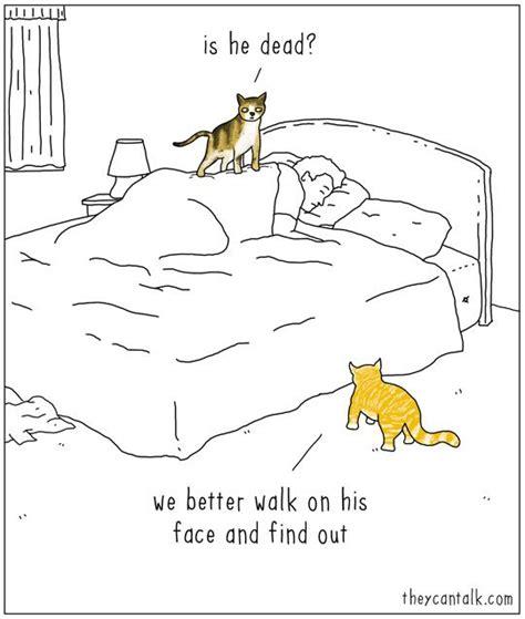 Cartoon Cat Memes - 456 best images about cat cartoons on pinterest patrick