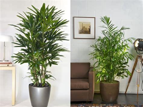 imagenes de plantas verdes de interior foto plantas interior de miriam mart 237 1006263 habitissimo
