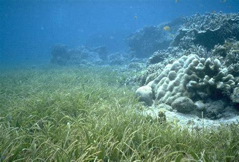 Sein Agrass oceanography