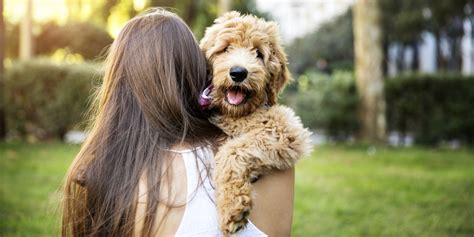 with dogs 10 things dogs teach us about what matters most huffpost