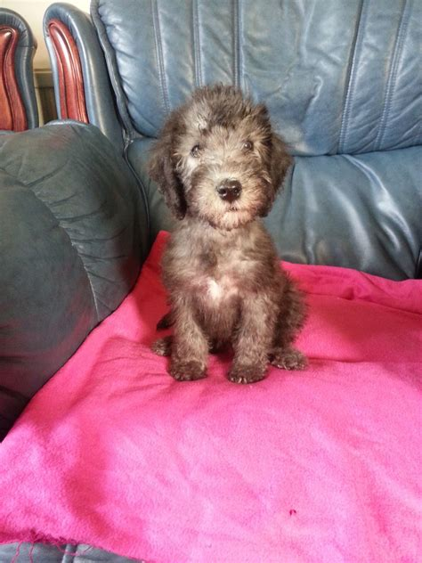 available puppies puppy available breeds picture