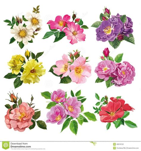 wild rose images recherche google flower vine tattoos