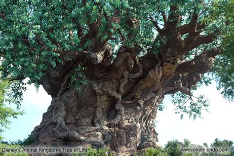 tree of life masters of the old world the tree of life the leaves