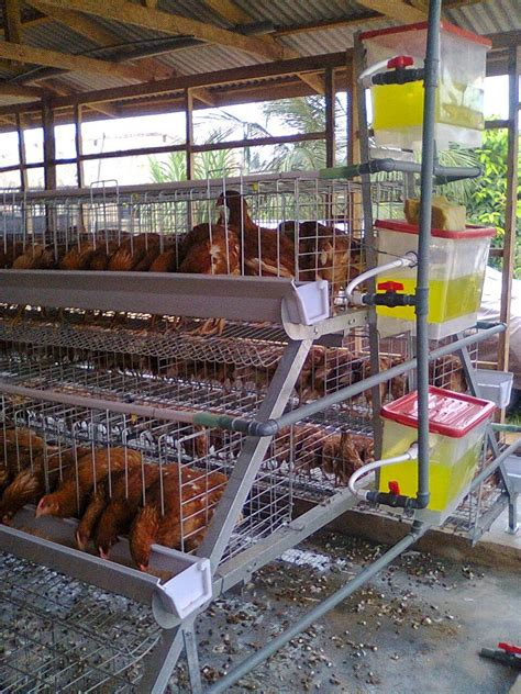 broiler house plans south africa poultry farm design