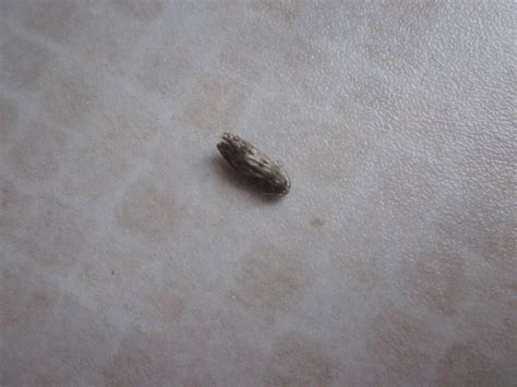 tiny moths in bedroom psoriasisguru