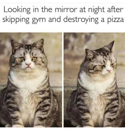Cat Gym Meme - 1000 ideas about workout memes on pinterest funny