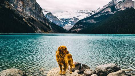 golden retriever instagram aspen the mountain pup new top of the ski slopes cnn