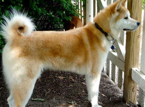 sized dogs amazing medium sized breeds breeds puppies difference between the large and