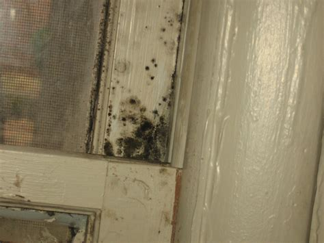 Mold On Windowsill ncsu pdic household molds what hurricane irene left