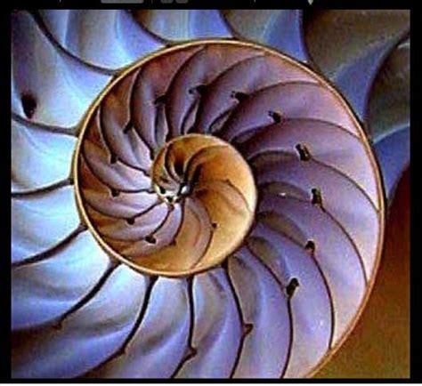nautilus pattern nature nautilus quilt shirley anne sherris