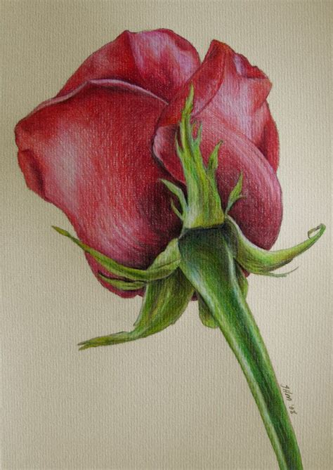 libro flowers in colored pencil 25 best ideas about colored pencil drawings on color pencil art prismacolor and
