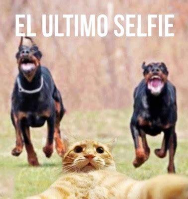 imagenes chistosas gratis para descargar al celular imagenes chistosas graciosas humor sano imagenes