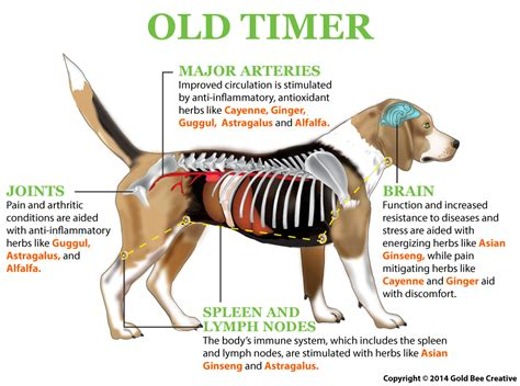 arthritis in dogs nhv timer for dogs joint arthritis support nhv pet products