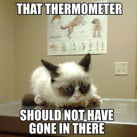 Tard The Grumpy Cat Meme - sober in a nightclub grumpy cat goes to the vet
