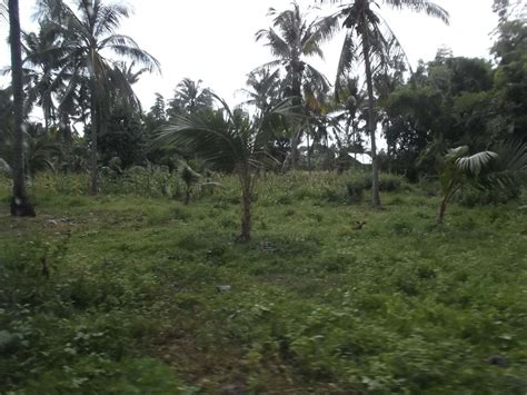 cheap properties for sale cheap remote property for sale philx pat real estate