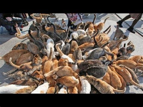 cat island japan it s like that quot cat lady quot but an japan s cat island incredible youtube