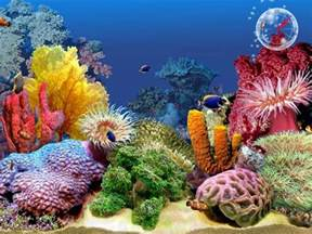 resolute desk wikip 233 dia tropical fish 3d screensaver tropical fish 3d
