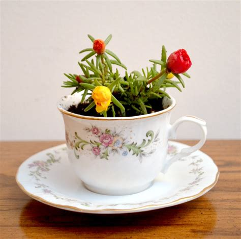 when tea cups become flower pots cute transformations