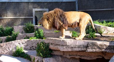 fotos animales zoo barcelona pensamientos jfs un d 237 a en el zoo de barcelona
