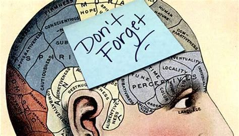 how is a s memory the science exercise and your brain