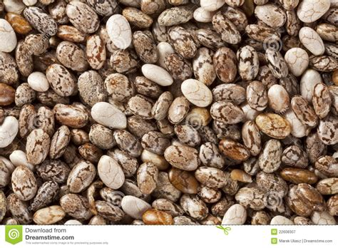 x seeds chia seeds at 2x size magnification stock image