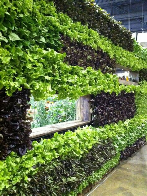 Vertical Garden Lettuce 17 Best Images About Everywhere Gardens On