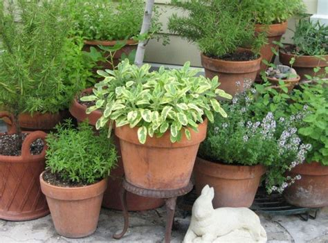 planning plants how to organize a more productive vegetable patch global garden friends inc