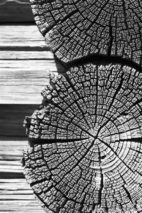 nature pattern black and white free images nature black and white leaf village