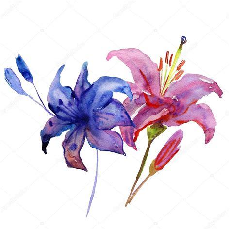 fiori ad acquerello fiori dipinti ad acquerello foto stock 169 olies 90360400