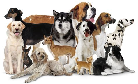 dogs finding dogs domestic dogs different types of dogs dk find out