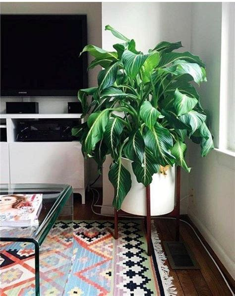 house plants no light 10 houseplants that don t need sunlight leedy interiors
