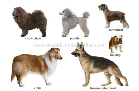 how many breeds are there tag for how many breeds of dogs are there litle pups