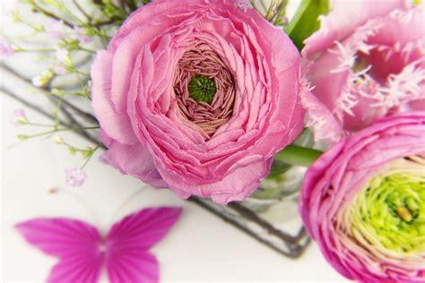 fiori ranuncoli ranuncoli coltivazione e usi