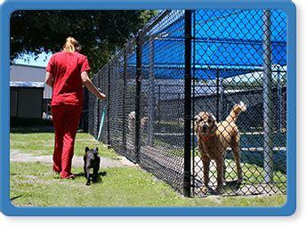 boarding jacksonville fl mandarin animal hospital jacksonville veterinary care fl