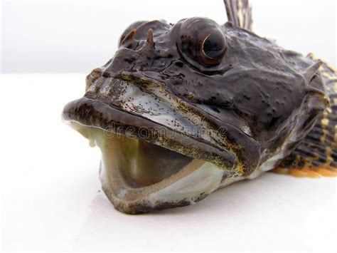 pesci testa di testa dei pesci immagine stock immagine di testa scuro